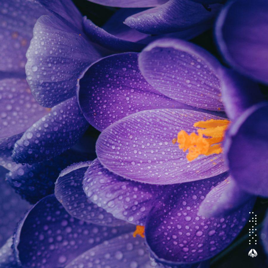 yuhei miura x Kazuki Isogai - Sadimare EP Cover Art